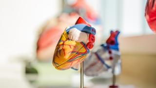 梁國輝醫生:心跳持續每分鐘低於40下 需要安裝起搏器