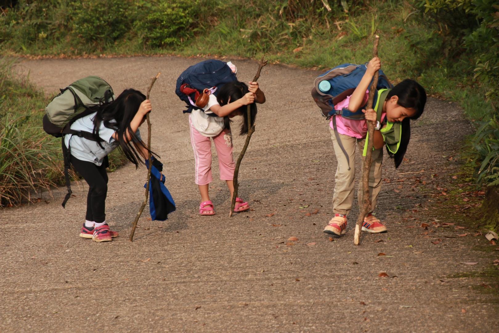 孩子們用木棍充作登山杖。