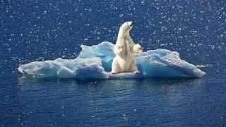 氣候危機與生態理論再興起