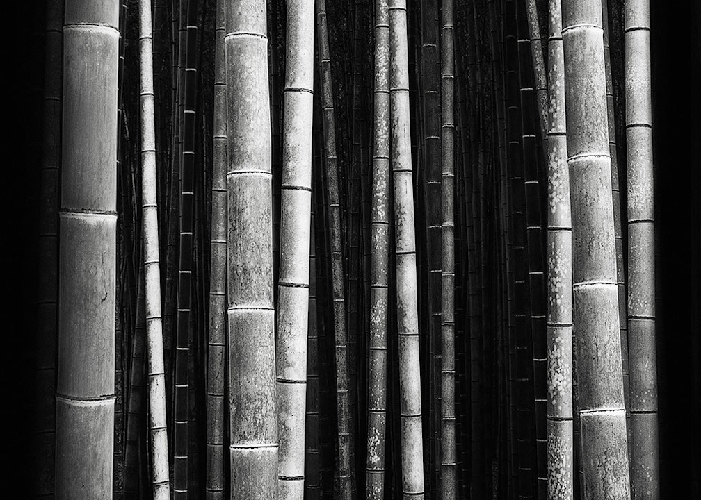 《Bamboo Forest 竹林》