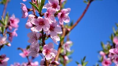 本月是桃花劫月。不論已婚未婚,若出現突如其來的異性緣份,應小心提防。(shutterstock)