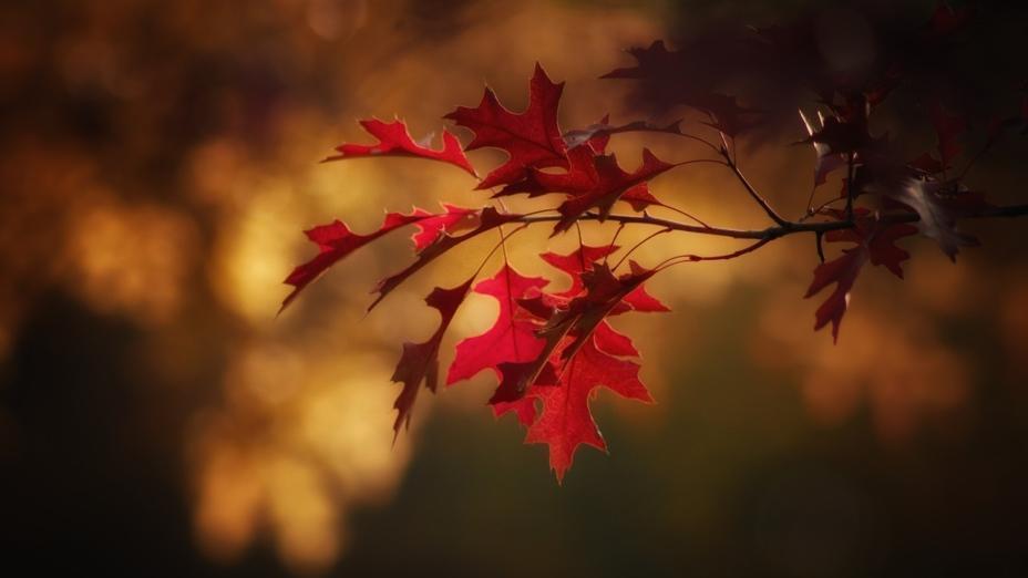 秋天晚上最好在10點半前睡覺,因為11點以後人體各個器官的功能都開始下降,需要休息。(Pixabay)