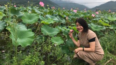 雨後,遠山氤氳,蓮花含笑。
