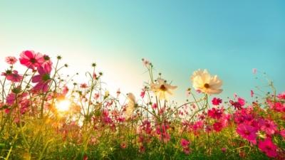 花圃裏萬紫千紅,那種名貴的花卉開得尤其漂亮,就像一縷縷明媚的春光。(Shutterstock)