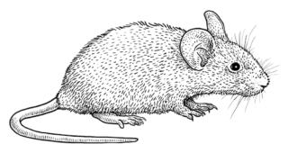 周國平:重讀《鼠疫》有感