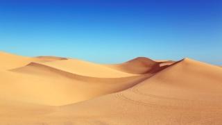 疫情下教學:在沙漠教游泳?