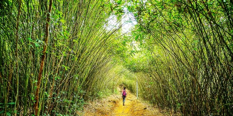 Gwenny 探索北港「竹林隧道」Gwenny Explores Bamboo Tunnel of Pak Kong