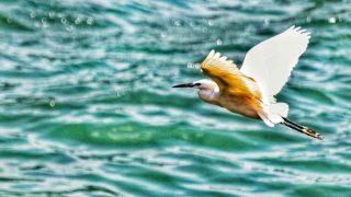 翺翔大埔河上 Flight over Tai Po River