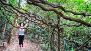 卡門探索「茅坪巨藤」 Carmen Explores Vine Creepers at Mau Ping