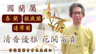 香港蘭藝會會長朱劍虹:國蘭屬春蘭、報歲蘭、達摩蘭 清香優雅 花開富貴《辛丑牛年運程》