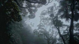 迷霧罩香港 Dense Fog Shrouds Hong Kong